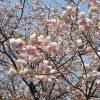 造幣局広島支局の花のまわりみちのシャトルバスの時刻や駐車場について